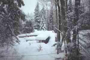 snowygreenhouse