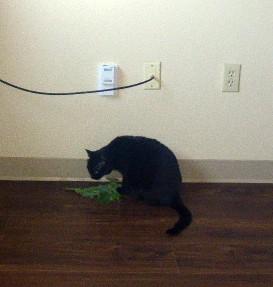 Olive&Catnip