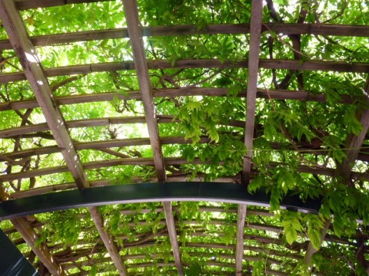leafyceiling