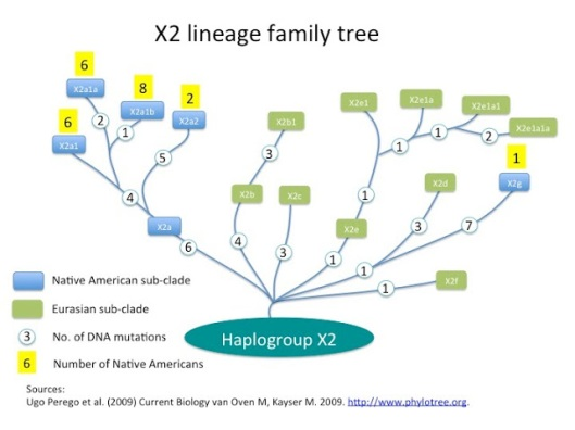 xlineage