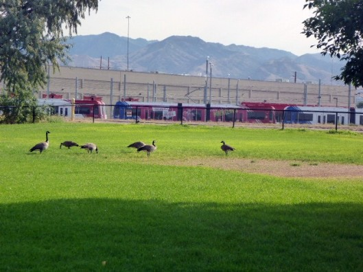 geeseinpark