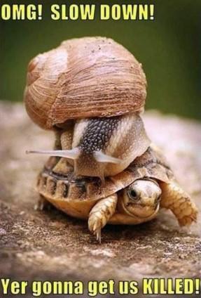 slowdownomg