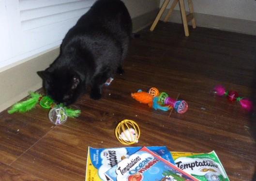 cat-presents