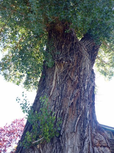 massive-trunk