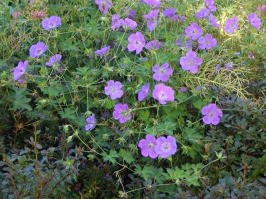 purple-things