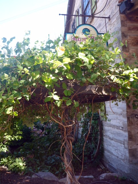wagon-wheel-tree