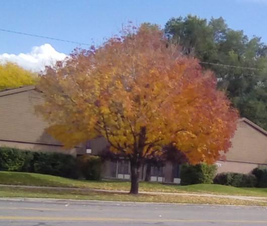 across-street-tree