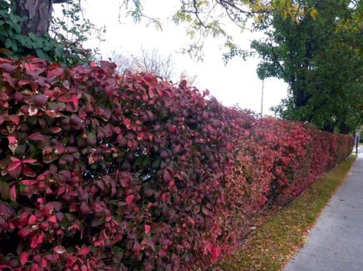 bush-fence