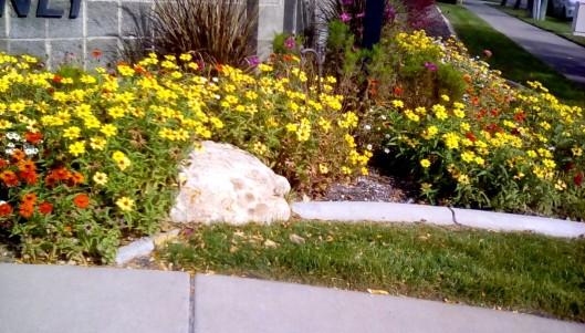 corner-flowers