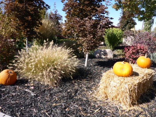 fall-landscaping
