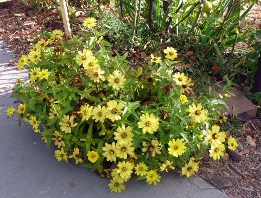 fall-yellow