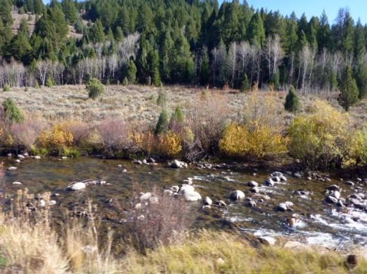 flowing-stream