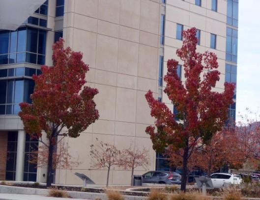 hospital-trees