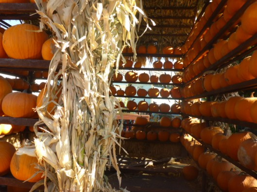 inside-pumpkin-house