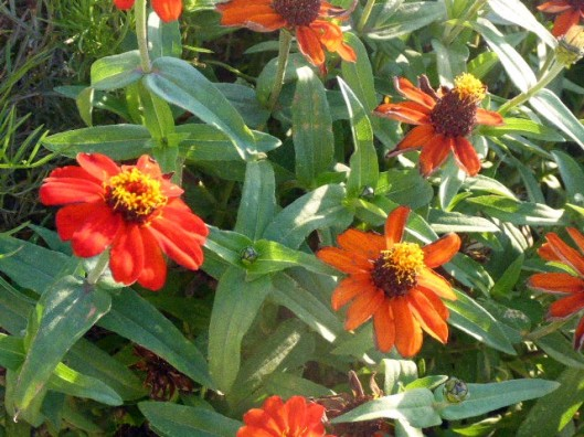 last-hurrah-orange-flowers