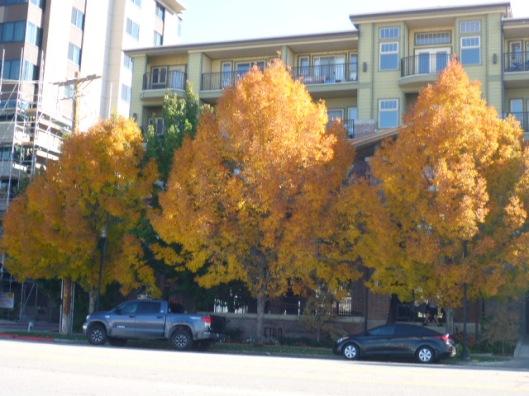 metro-trees