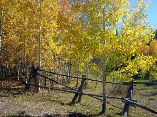 rustic-fencing