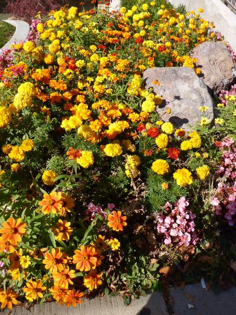 sacred-circle-flowers