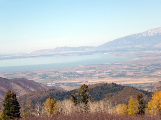 utah-lake-with-trees