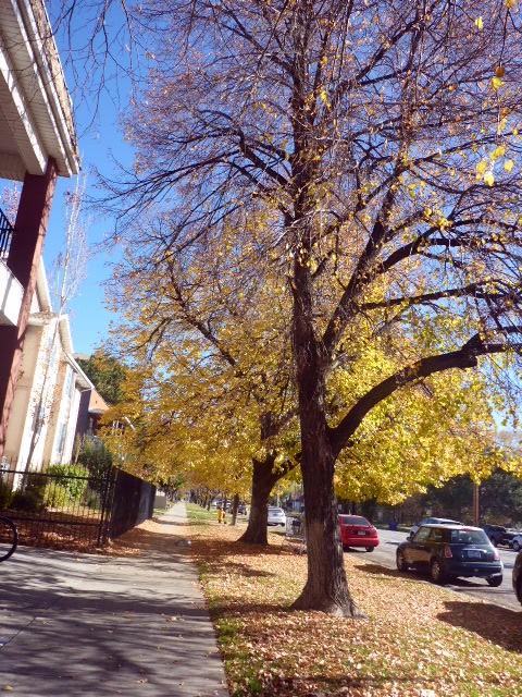 a-few-leaves