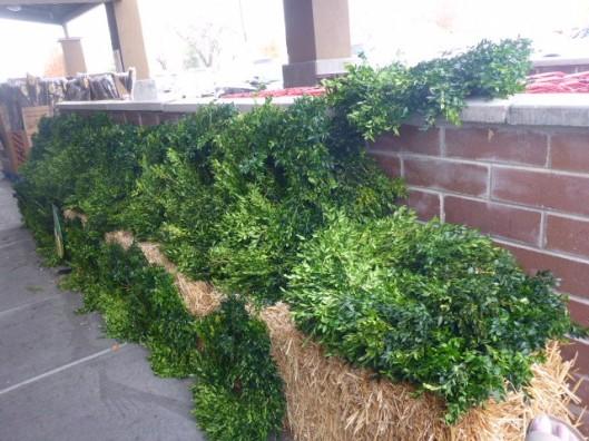 boxwood-wreaths