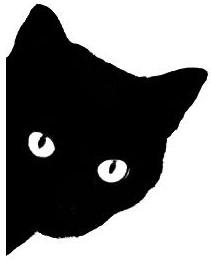 cat-stare