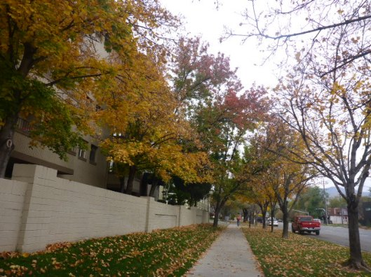fall-walk
