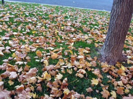 leaves-fallen