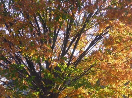 light-through-leaves