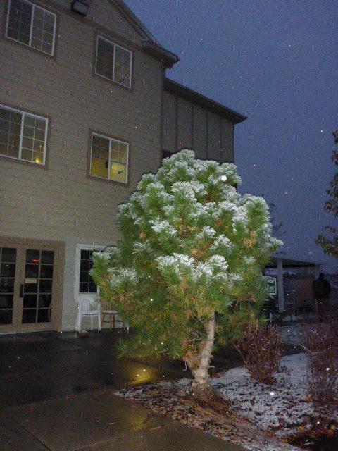 pine-snow