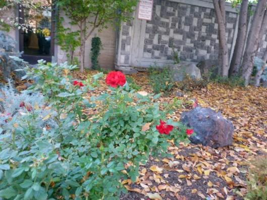 red-rose-niche
