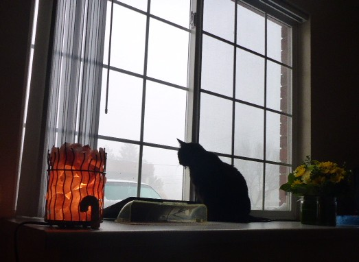 cat-thoughts