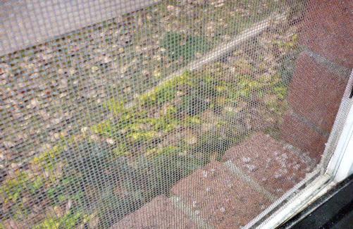 graupel-on-windowsill
