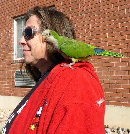 parrot-on-shoulder-linda