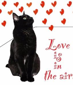 love-cat