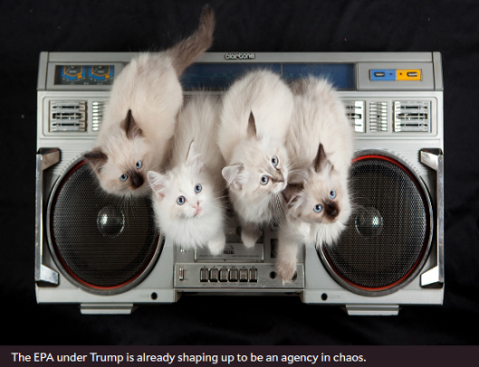 trump-cats